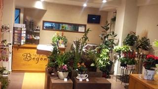 Floristeria Begonia